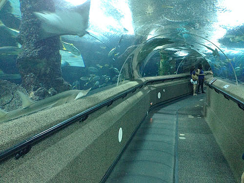 The famous Underwater World travelator tunnel